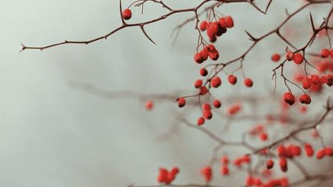 December Garden