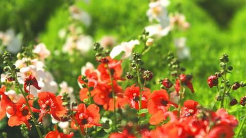 March Garden